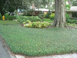 Florida Landscape Ideas by Many Ground Covers Are Suitable For Residential Yards Florida