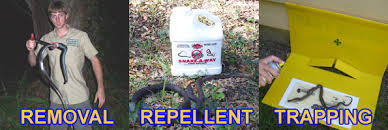 How Do You Get Rid Of Skunks In Your Backyard How To Get Rid Of Snakes