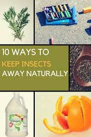 10 ways to keep insects away naturally no repellent required