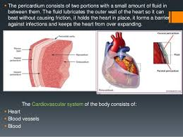 Anatomy And Physiology Place Anatomy And Physiology Of The Heart