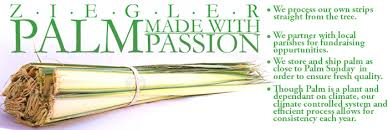 where to buy palms for palm sunday fresh palm strips for palm sunday zieglers