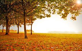 fall landscapes awesome autumn tree fall landscape tree landscape