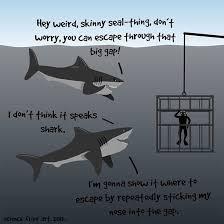 Nice Guy Memes - sharks are nice guys meme guy