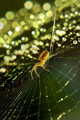 the legend of the christmas spider all christmas