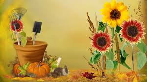 flowers tools bunny leaves gold sunflowers harvest pot summer