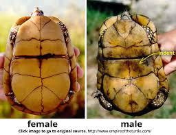 93 best turtles images on tortoise turtle tortoise