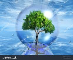 images of tree in a sc