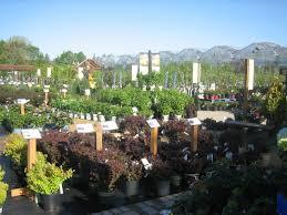 Landscape Nurseries Near Me by Nursery Pahl U0027s Market Apple Valley Mn