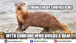 Otter Memes - otter memes