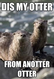 Otter Memes - anotter otter memes quickmeme
