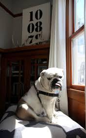 414 best dogs images on pinterest schnauzers miniature
