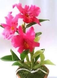 Flower Orchid Orchid Pot Ebay
