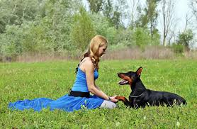 belgian sheepdog pros and cons the pros and cons of protection dogshigh class k9