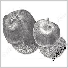 apples still life study pencil drawing art original artwork
