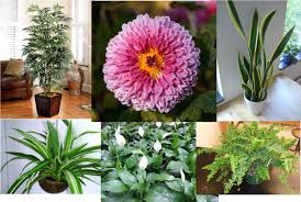 top 10 best air filtering house plants youtube