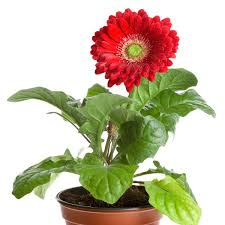 Indoor Flower Plants Which Houseplants Improve Indoor Air Quality The Best Vibrant
