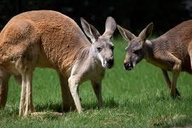 kangaroo talk zoo atlanta