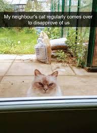 Crazy Cat Memes - 21 crazy cat memes guaranteed to make you laugh cutesypooh