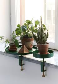 Green Plants The 25 Best Green Plants Ideas On Pinterest Plant Plants And