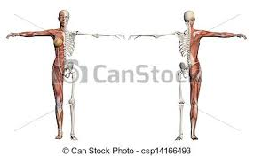 stock illustration of female body stylised sketch of a