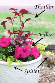 Container Flower Gardening Ideas Planting Flower Pots Thriller Spiller Filler Container Gardening