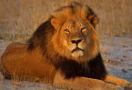 u s provides endangered species act protections for lions