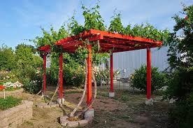 build grape trellis how to build grape arbors using this practical design and growing