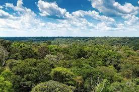 canopy amazon choosing the perfect peru amazon lodge posada amazonas