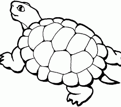awesome turtle coloring 23 remodel free