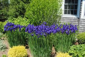 o u0027leary landscaping u0026 irrigation u2013 cape cod