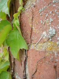 the last leaf by o henry engelsk ndla