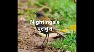 birds name in english hindi with picture birds name with picture