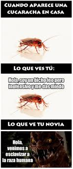 Buenos Memes En Espaã Ol - cucarachas en casa jaja meme risa buenos memes pinterest meme