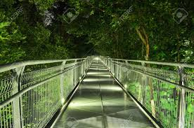 downward lighted walkway surrounded by trees at stock photo