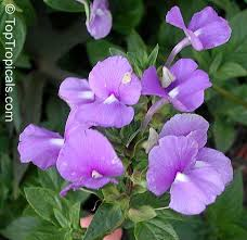 1074 best strange and familiar plants images on pinterest rare