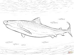 realistic tiger shark coloring page free printable coloring pages