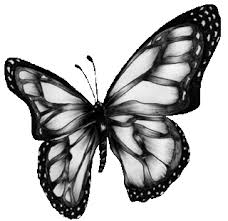 free black and white butterfly free clip free clip