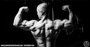 the intermediate bodybuilding sample program rippedbody com