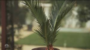 easy plants by boom naturally danny seo nbc youtube