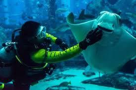Aquarist Resume Stunning Aquarist Resume Images Simple Resume Office Templates