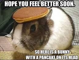 Feel Better Meme - hope you feel better soon so here is a bunny with a pancake on