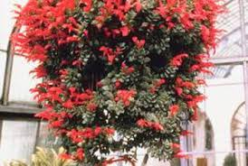 hanging flowers the best way to plant flowers in a hanging basket home guides