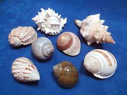 assorted seashells eight assorted seashells jumbohermit crab shells
