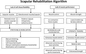 rehabilitation of scapular dyskinesis from the office worker to