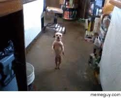Dancing Dog Meme - dancing dog because reasons meme guy
