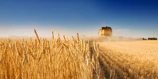 farms farmettes u0026 farmland for sale nationwide united country