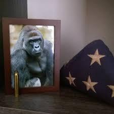 Shots Fired Meme Origin - the harambe meme is still going strong and it s about a lot more
