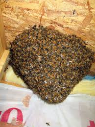 winter park bee removal call 321 206 5100