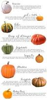 What Kind Of Mulch For Vegetable Garden by 25 Best Pumpkin Growing Ideas On Pinterest Pumpkin Garden
