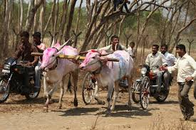 indian cart breaking animal equality india successfully puts an end to